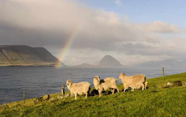 image faroe-islands-007-jpg