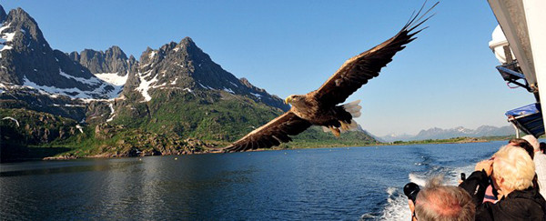 Hurtigruten eagle